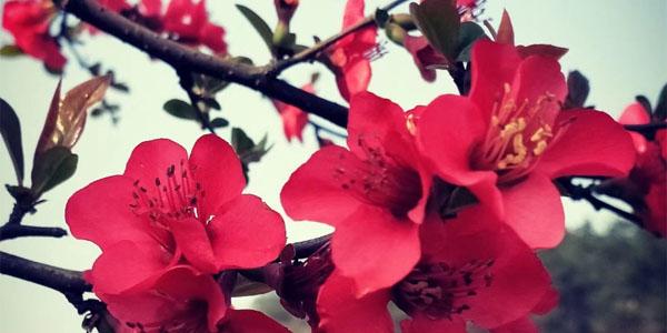 四月的春风